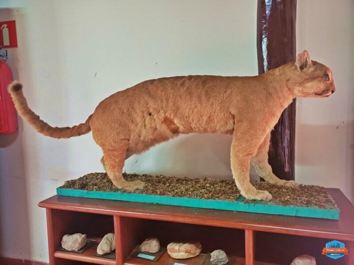Museu de animais empalhados em Caldas Novas