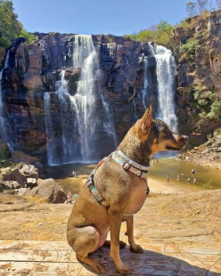 Passeios pet friendly perto de Goiânia, cachoeira que aceita cachorro em pirenopolis, cachoeiras que pode levar animais de estimacao em goias