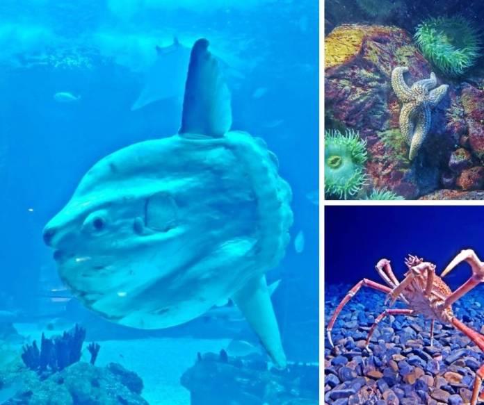 oceanário de lisboa, aquario de lisboa, ingresso do oceanario de lisboa, lisboa com pequenos