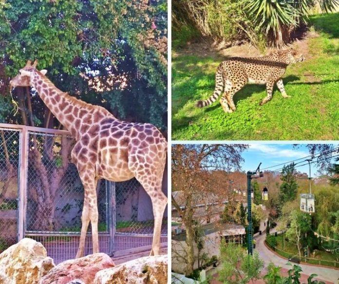 Melhores passeios de Lisboa com crianças: zoológico