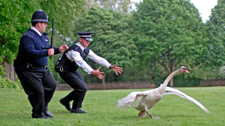 hot-fuzz-watching-videoSixteenByNineJumbo1600.jpg