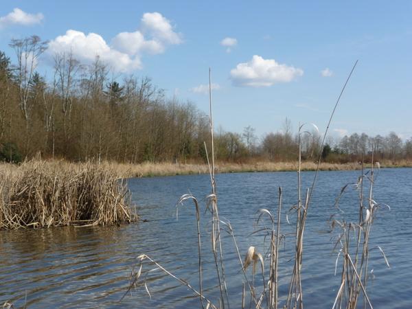 带你逛公园:Surrey Lake Park