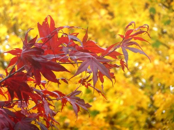 秋色尽显:家门前自拍
