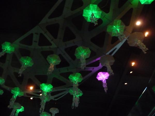电鳗发电点亮了圣诞彩灯。