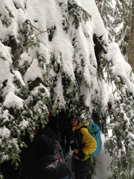 大树底下好避雪。