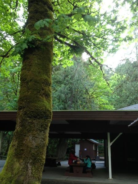 野餐区设施齐全、环境优美