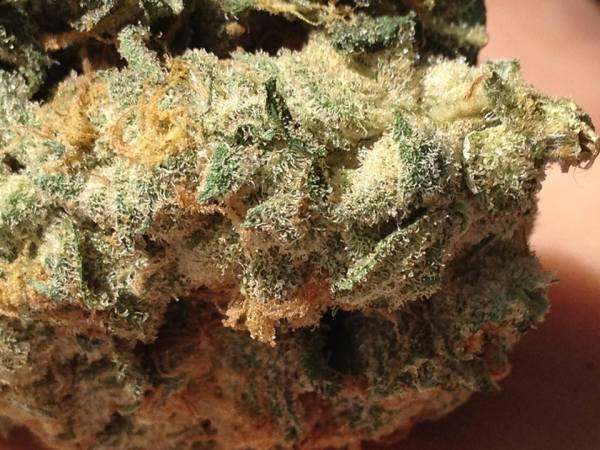 Cannabis Flower Ormus