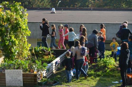 edible garden barb mcmahon sprouting chefs gardening tips