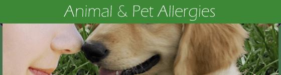 allergies-animals