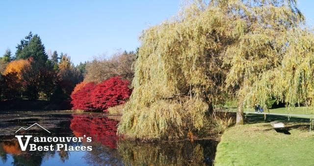 Autumn at VanDusen Garden