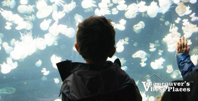 Boy Looking at Aquarium Jelly Fish