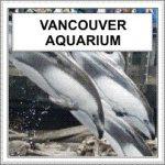 Dolphins at Vancouver Aquarium