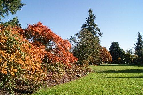 VanDusen Garden in Fall