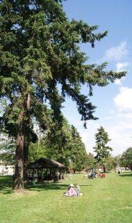 John Braithwaite Park