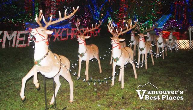 Bright Nights Reindeer at Stanley Park
