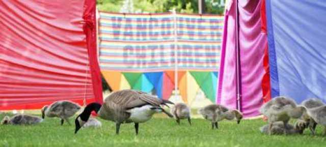 Goose Family at Granville Children's Festival