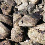 Oil Debris on Rocks