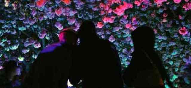 Sakura Illumination Silhouettes