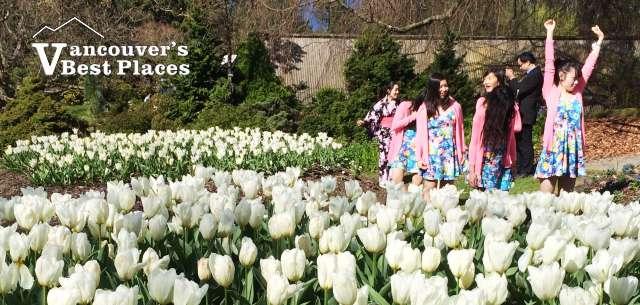 Spring Flowers at VanDusen Gardens