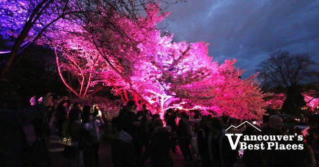 Spring Lights Illumination