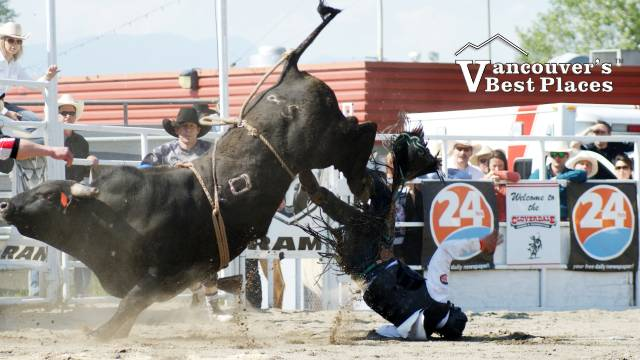 Running from a Rodeo Bull