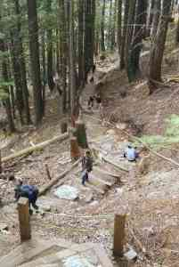 The Grouse Grind Trail