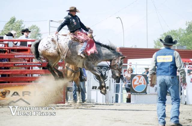 Cloverdale Rodeo Bucking Bronco