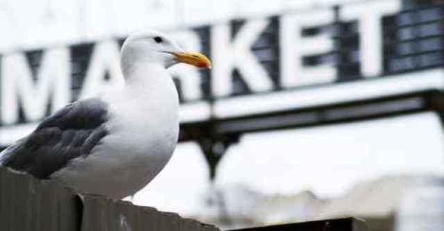 Seagull by Granville Market Sign