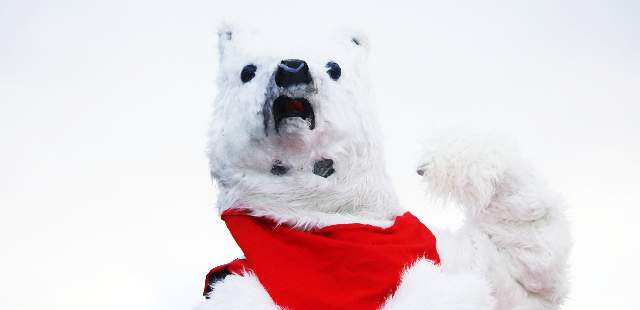 Polar Bear Swim Costume