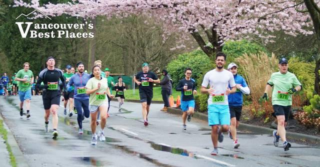 5K Runners Under Cherry Tree Blossoms