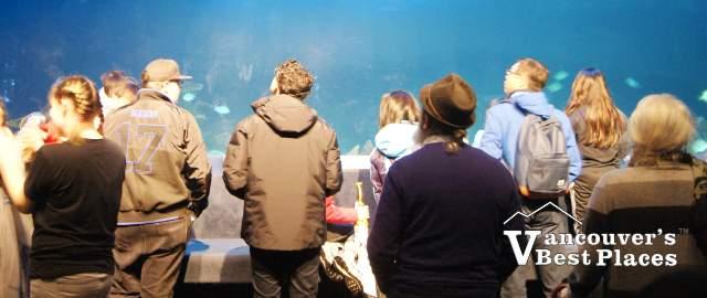 Vancouver Aquarium Fish Tank and Crowds