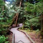 Camosun Bog Boardwalk