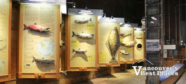 Gulf Cannery Fish Displays