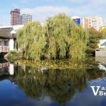 Sun Yat-Sen Garden and Park