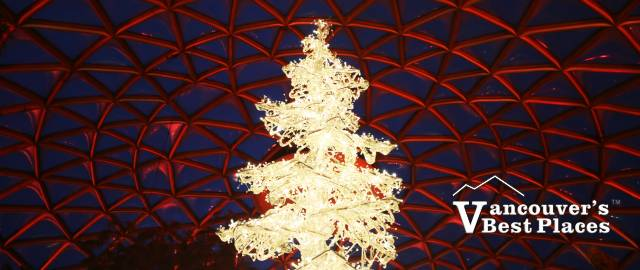 Christmas Tree at Bloedel Conservatory