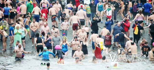 Crowds of Penguin Plunge Swimmers
