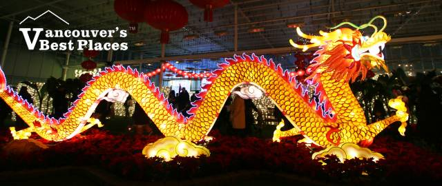 Glow Gardens Chinese Dragon