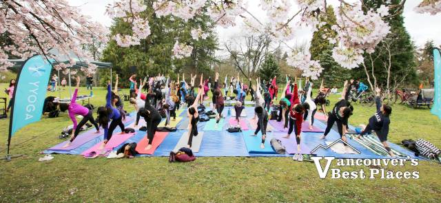 Yoga Under Cherry Blossoms at the Park