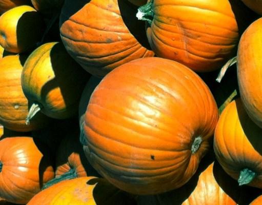 Vancouver Pumpkins Patches