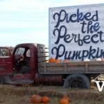 Richmond Country Farms Pumpkin Patch