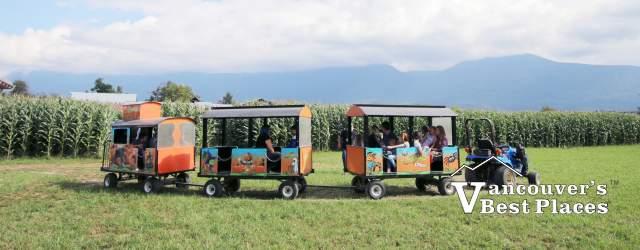 Train Rides in the Corn Field