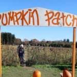 Pumpkin Patch at Aldor Acres