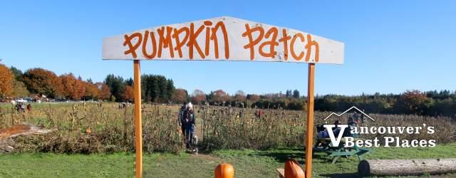 Langley's Aldor Acres Pumpkin Patch