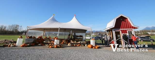 Eagle Acres Dairy Pumpkin Patch