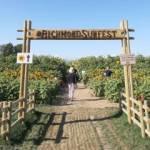 Richmond Sunflower Festival Garden