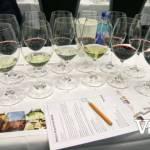 Wine Samples at Wine Festival Workshop
