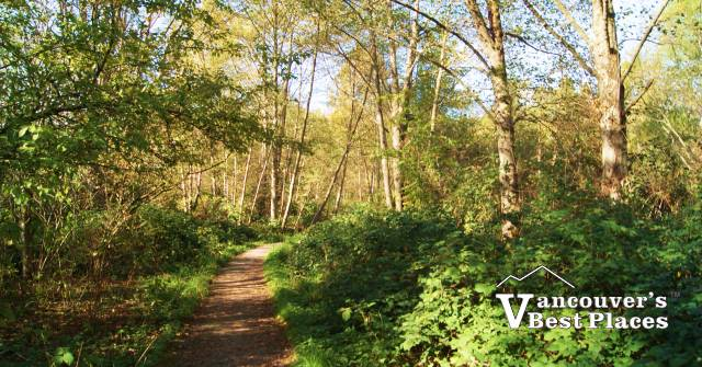 Maplewood Trails in Early Fall