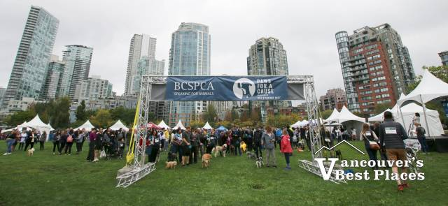 Paws for a Cause in Vancouver