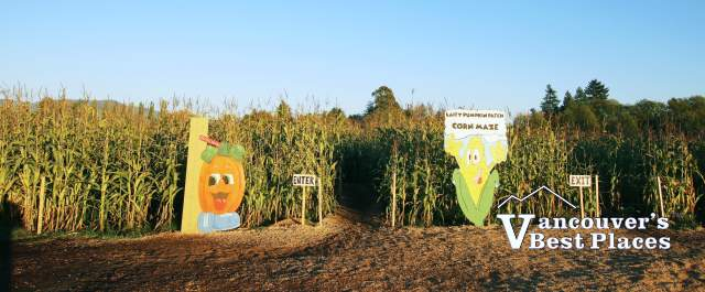 Laity Pumpkin Patch Corn Maze