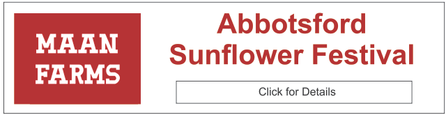 Maan Farms' Abbotsford Sunflower Festival